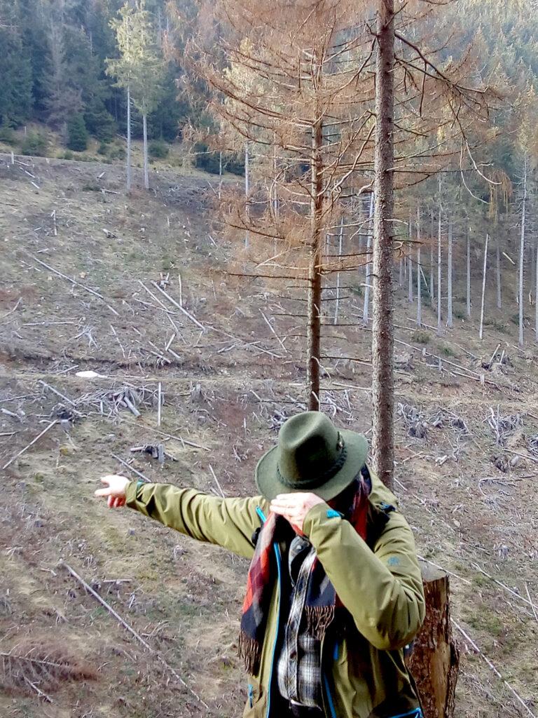 Rammelsberg Ostflanke von Giengelsberg